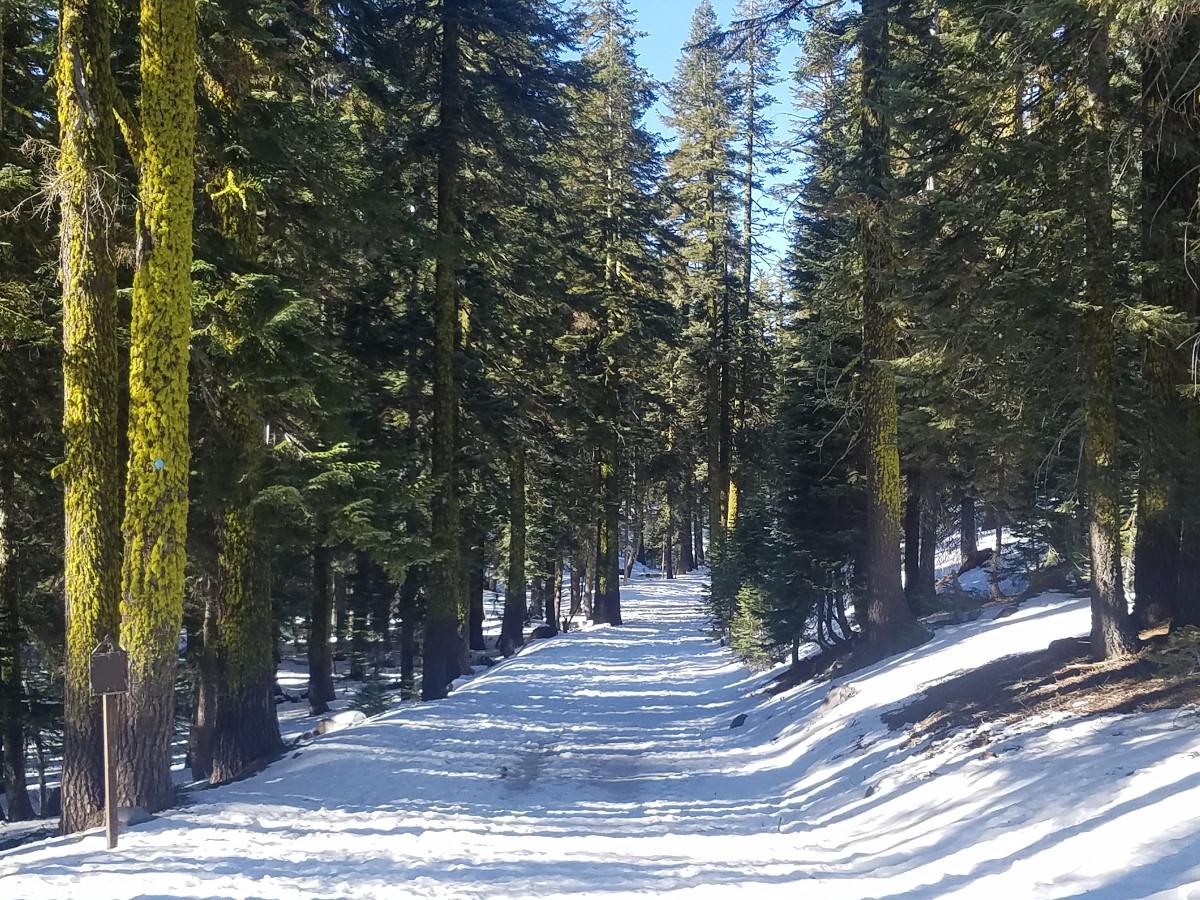 Upper Sand Flat X-C Trail
