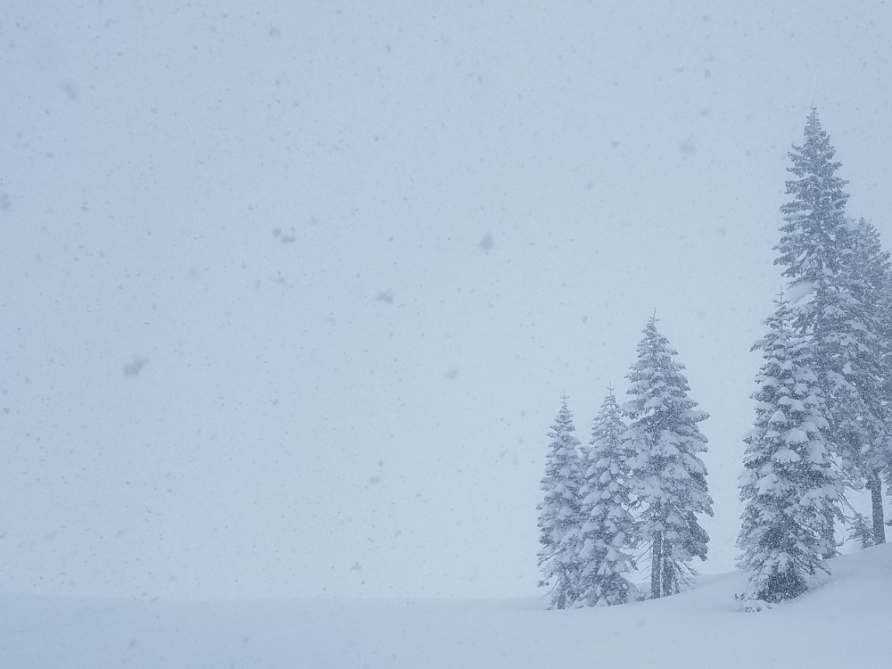 Whiteout Conditions above Treeline