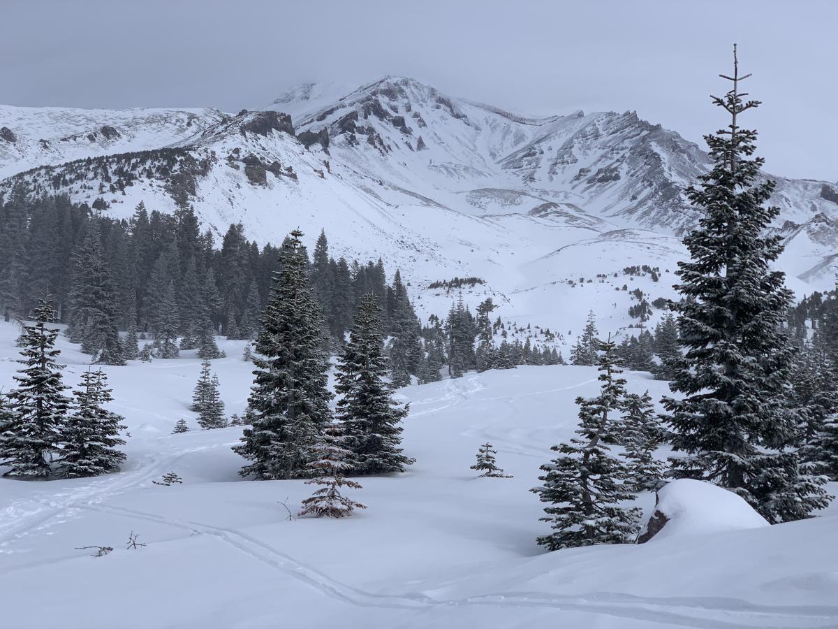 Avalanche Gulch, near treeline.