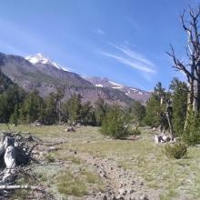 Northgate trail, just below treeline