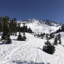 Near treeline Avalanche Gulch
