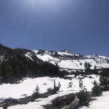 Near treeline, 8,000 feet