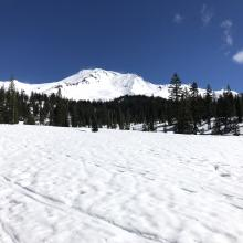 Looking up at Mount Shasta near Bunny Flat