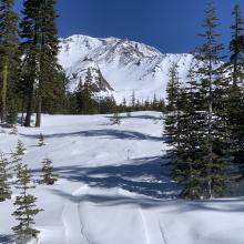 Below treeline snow surfaces