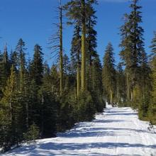 Road to Ash Creek Butte - Groomed, but at times exposed to dirt