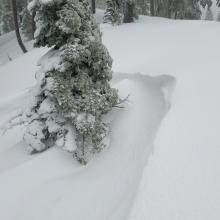 Wind lips below treeline - unreactive to ski cuts