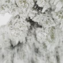 Near treeline trees shellacked with ice, widespread rain crust under 4-8 in of light snow