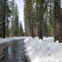 Road 19 Plowed for Logging Operations