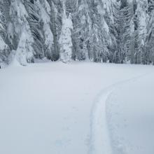 Deep surface snow, ski penetration 14-20 inches.