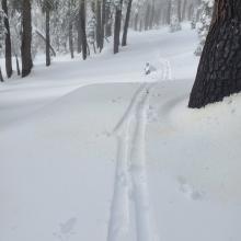 Ski Penetration Near Treeline