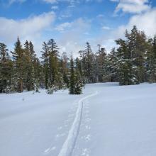 Up to 20 cm (8 in) of Storm Snow Below Treeline