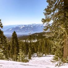 Below treeline, Green Butte ridge