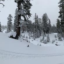 Typical snow coverage below/near treeline