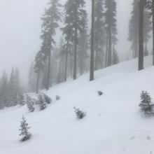 Below treeline conditions at 1230 hrs on 3.20.19