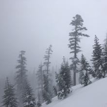 Looking towards Avalanche Gulch (note: Large trees were moving in wind)