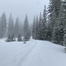Below treeline, lower Avalanche Gulch, 1200 hours