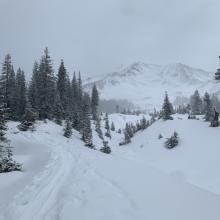 Near treeline, Avalanche Gulch