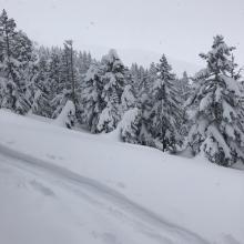 Ski pen of 2-3 inches near treeline