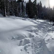 Below treeline along the trail to Heart Lake