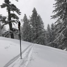 Ski pen of 2-3 inches at 7,800 Feet