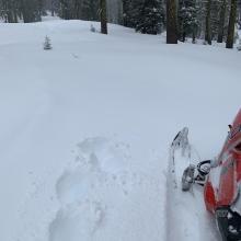 Below treeline conditions were good, 3-6