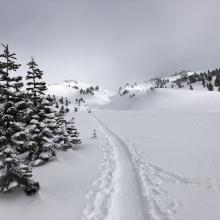 Ski track near treeline Avalanche Gulch