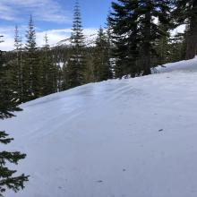 Icy patch in open area along ridgeline below treeline near Bunny Flat