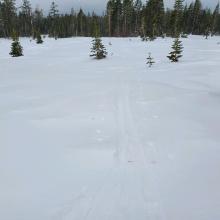 1-2 inch (3 cm)  Ski penetration