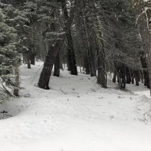 Tree debris has littered the snow surfaces below treeline