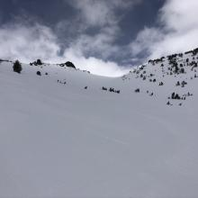 Snow surfaces near treeline in Giddy Giddy Gulch