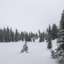 Snow surfaces below treeline