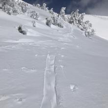 wind loading quickly filling in recent tracks above treeline
