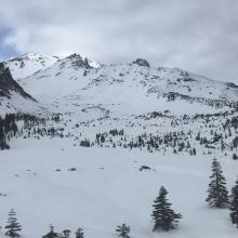 Looking up into the Old Ski Bowl from treeline
