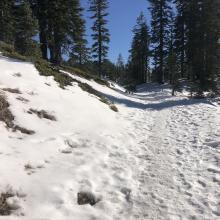 Horse Camp Trail near Bunny Flat