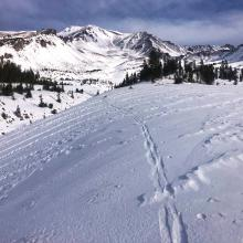 Firm wind textured snow in open area near treeline