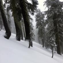 Big trees on the west aspect of Grey Butte host the deepest snowpack.