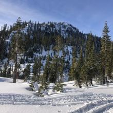 East aspect of Gray Butte.