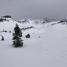 Near Treeline. An inch of undisturbed fresh snow remains.