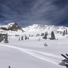 Looking up Old Ski Bowl, near treeline.