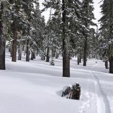 Below treeline conditions