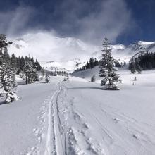 Avalanche Gulch, near treeline