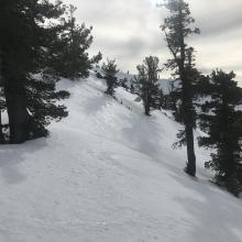 Typical near treeline snow surfaces, softening by mid-day