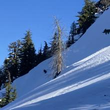 The crown from the recent slide was still visible in areas but the slope was reloading since the slide had occurred.